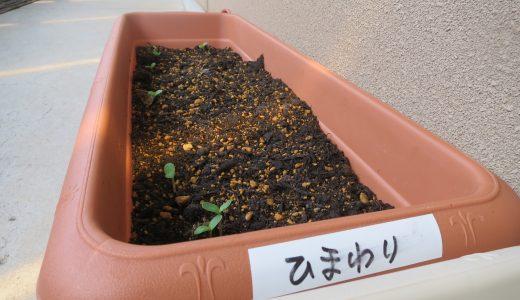 5月種植え🌻